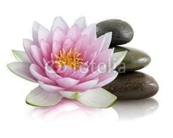 Fleur pierre fond blanc 2